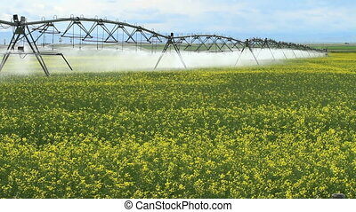 Irrigation Sprinklers - Irrigation sprinklers watering field...