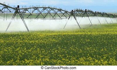 Irrigation Sprinklers - Irrigation sprinklers watering field...