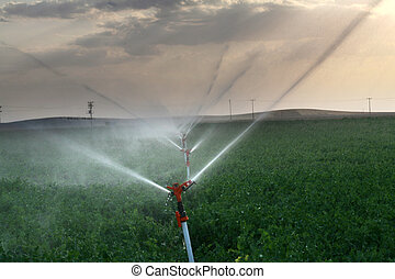 Irrigation sprinklers water a farm field against late...