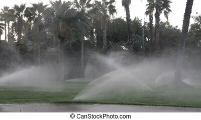 Irrigation sprinklers working on a green lawn with palm...