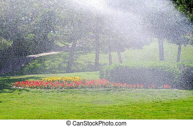 Irrigation of the bushes and trees. Summer.