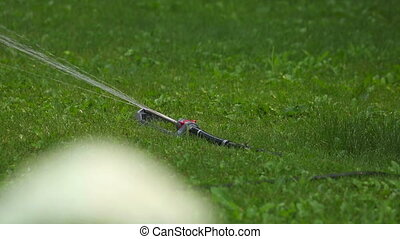 Irrigation. - Watering the lawn. Rack focus