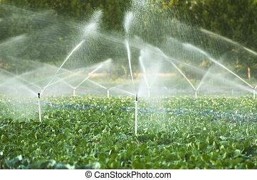 irrigation, systèmes, dans, a, potager