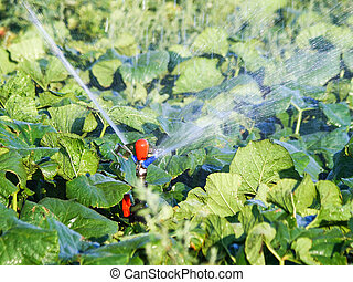 irrigation system in function watering plants