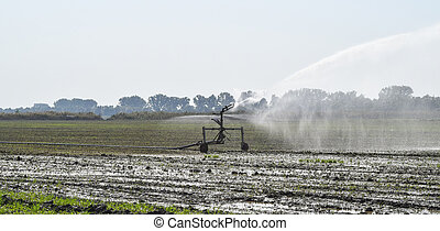 Irrigation system in the field of melons. Watering the fields. Sprinkler
