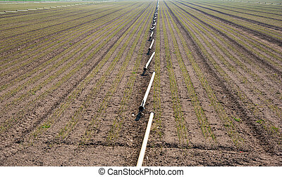 irrigation system in the field