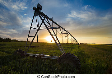 Irrigation system n wheat field