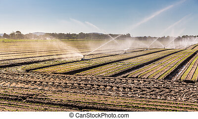 Irrigation system on a large farm field. Water sprinkler installation.