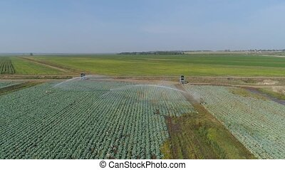 Irrigation system on agricultural land. - aerial footage...