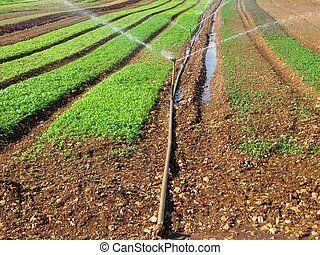 Irrigation system - irrigation system  technology