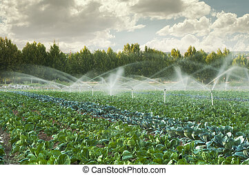 Irrigation systems in a vegetable garden