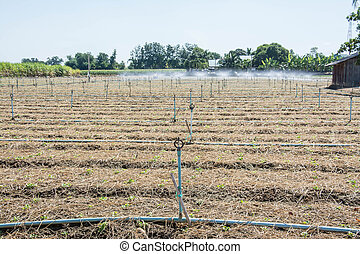 Irrigation systems in agricultural
