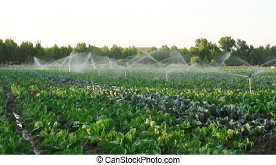 irrigation, vert, systèmes