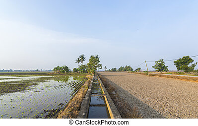 Irrigation water at paddy field with blue skies