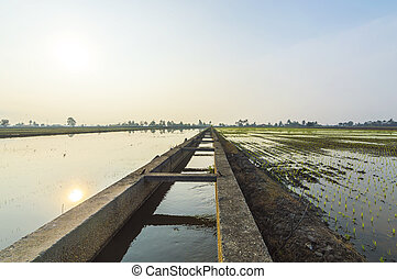 Irrigation water at paddy field with sunrise background