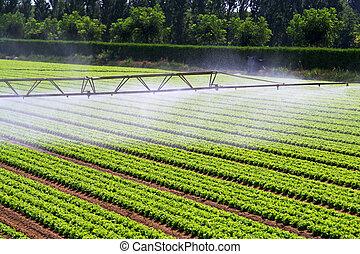 Irrigation water mist