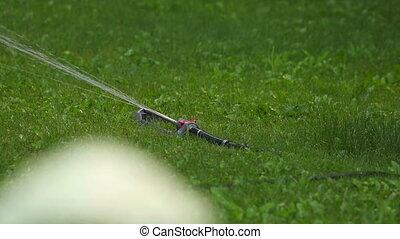 Irrigation. - Watering the lawn. Rack focus