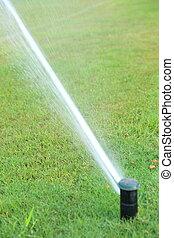 irrigazione, automatico, sistema, erba
