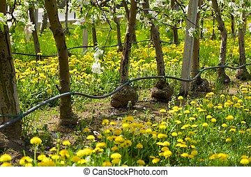 irrigazione, gocciolamento