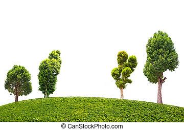 Irvingia malayana tree on grass