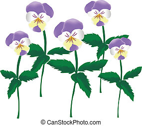 Viola Tricolor - Is a vector drawing, which shows the 5 ...