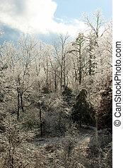 is dækkede træer