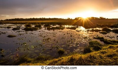 Sunset in the lake with water lilies, iSimangaliso Wetland Park, Kwa Zulu Natal, South Africa. Cinemagraph loop background.