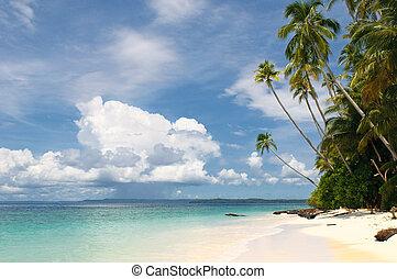 isla, -, árboles, tropical, palma, mar, cielo