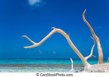 isla, arena, deadwood, paraíso, playa blanca