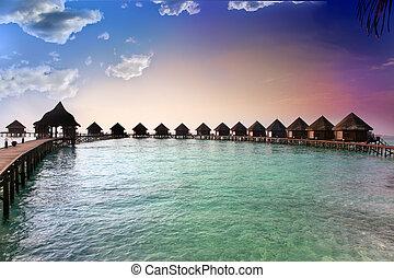 isla, maldives., océano, sunset.