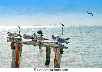 Isla Mujeres island Caribbean beach birds of Riviera Maya in...
