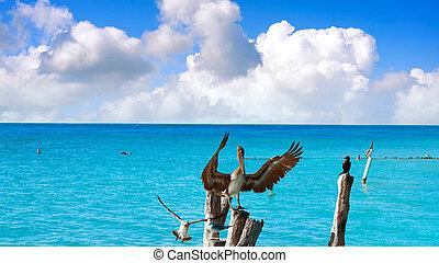 Isla Mujeres island Caribbean beach birds pelican of Riviera...
