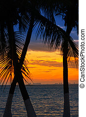 Isla Mujeres island Caribbean beach sunset palm trees...
