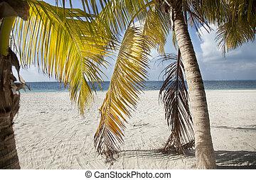 isla mujeres, mexiko