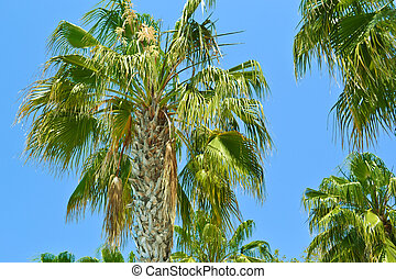 isla, paraíso, -, árboles de palma