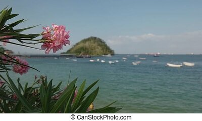 Isla Taboga Panama Central America - View of coast and beach...
