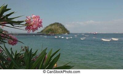 Isla Taboga Panama Central America