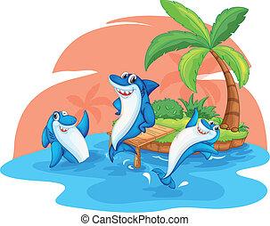 isla, tiburón, pez