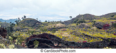 isla tropical, paisaje, volcánico, hawai, grande