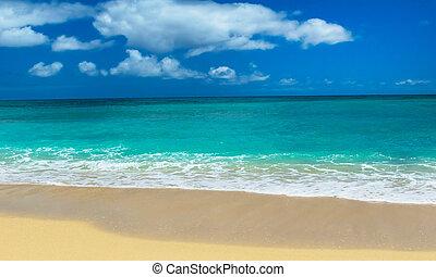 isla tropical, playa, arenoso, bora
