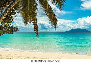 isla tropical, playa., perfecto, vacaciones, fondo.
