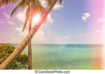 isla tropical, vendimia