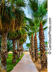 Island in the Mediterranean. Pedestrian path along the seashore is lined with palm trees. The concept of a classic beach holiday