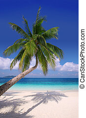 Island Paradise #2 - Palm tree hanging over a sandy white...