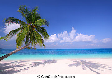 Palm trees hanging over a sandy white beach with stunning blue waters on a perfectly sunny day