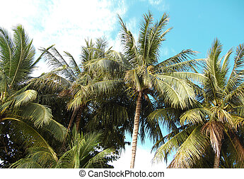 island paradise,tropical