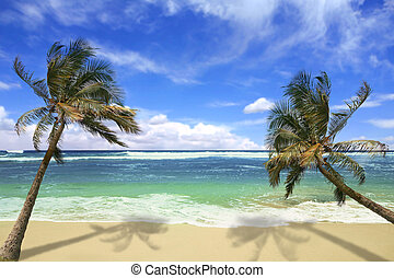 Sandy White Beach with Stunning Turquoise Waters and Palm Trees in Hawaii