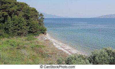 Island seashore with green vegetation, pine tree