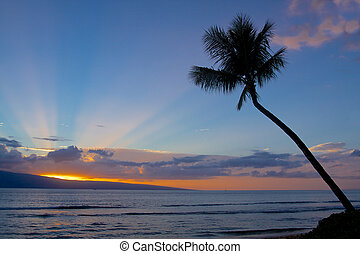 Island Sunset - a palm tree silhouetted against a beautiful...
