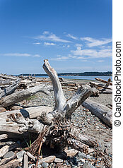 Island View Beach, Vancouver Island, British Columbia -...